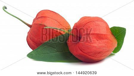 two closed husk tomatoes with leaf isolated on white background.