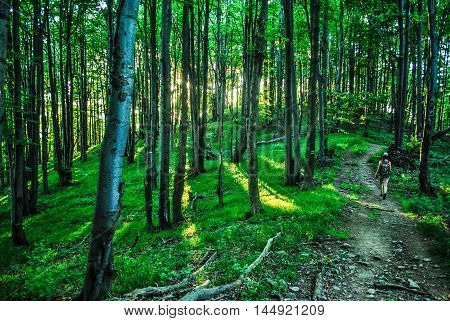 Forest in Bieszczady mountains, southeastern part of Poland