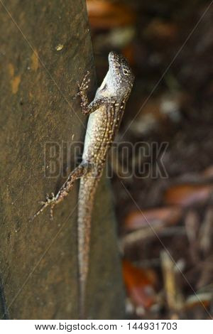 Brown anole hanging on a fence in the shadows.