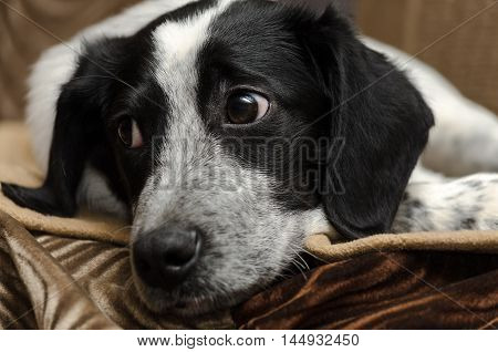 Sad, homeless puppy close-up head and look