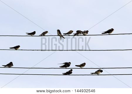 a lot of black birds, the swallows sit in rows on wires in the village