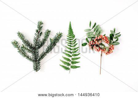 branches of pine needles ferns and mountain ash. flat lay top view autumn wallpaper