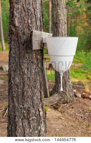 Water dispenser hanging on a tree in the forest