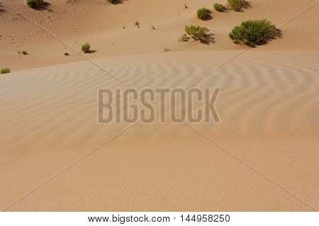 Morning Sun on Golden Sandy Ridges of Desert Texture with Blurred Dunes and Shrubs in Background