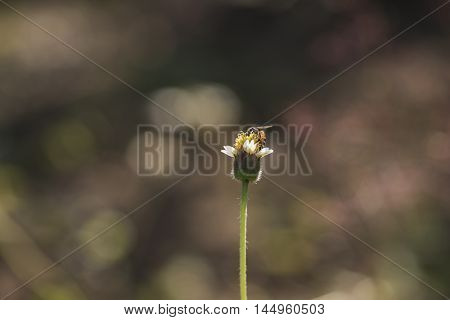 Small Asian Wasp Feeding On Native Plant Showing Body Hair And  Body Segments