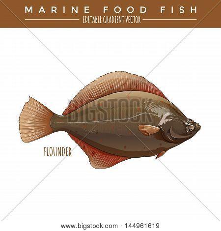 Flounder illustration. Marine food fish, editable gradient vector