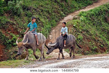 HA GIANG, VIETNAM, February 15, 2016 Children, ethnic Hmong, Ha Giang mountainous areas, raising buffalo