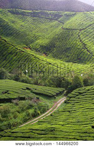 Cameron Highland, Malaysia..