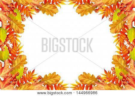 Colorful autumn foliage isolated on white background. Indian summer.