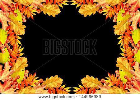 Colorful autumn foliage isolated on black background. Indian summer.