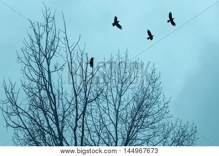 Black dry tree and crows silhouettes on blue sky background
