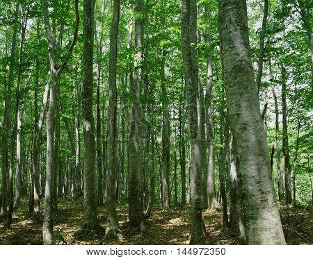 Green forest nature landscape