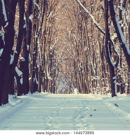 Winter scene in park