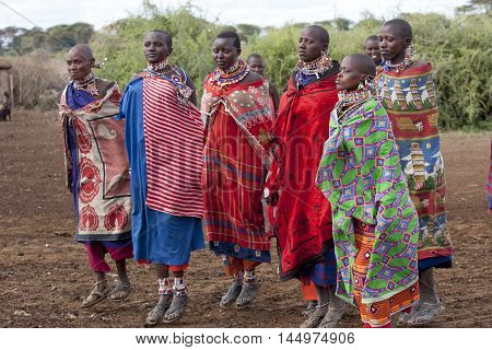 Editorial Photo Masai women dressed in national clothes and jumping in traditional dance January 2009 Amboseli Kenya
