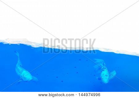 Two fish swim in a half-filled aquarium in blue water.