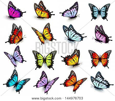 Set of colorful butterflies, flying in different directions. Vector.