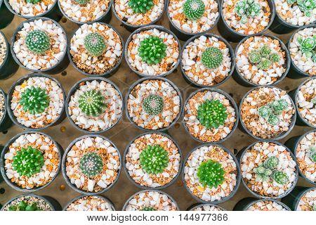 Beautiful small cactus field