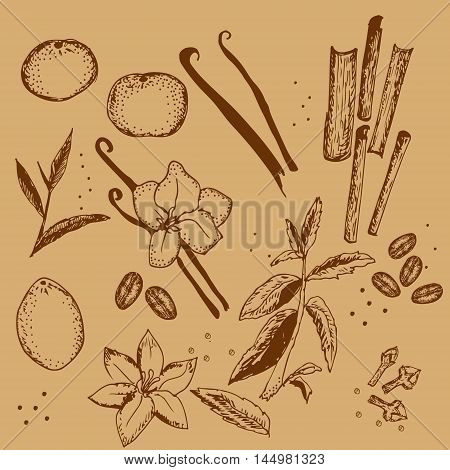 Hand drawn monochrome set of most popular aroma plants and spices isolated on beige. Food and perfumery theme illustration for different informational and entertaining sources. Textile. Wallpaper.