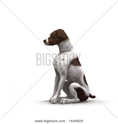 German Shorthair - 01