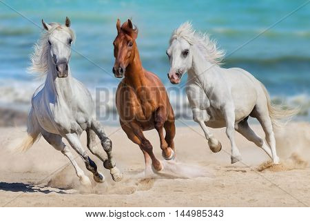 Horse herd run gallop on seashore against the ocean