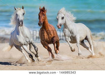 Horse herd run gallop on seashore against the ocean