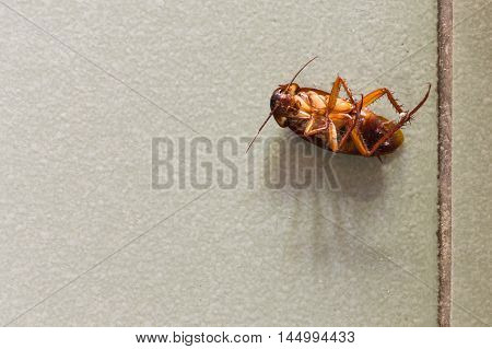 Dead cockroaches on floor in the house .
