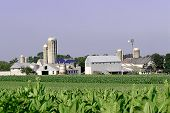 picture of mennonite  - amish farm with crops - JPG