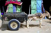 stock photo of jack-ass  - Donnkey with carriage in Mauritania west Africa - JPG