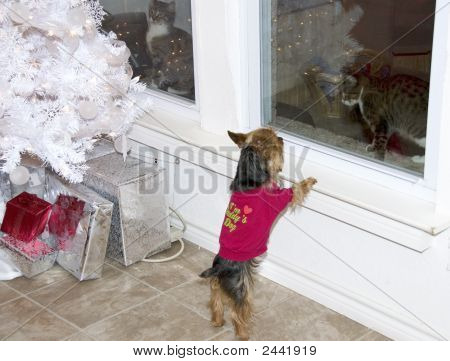 Dog And Two Cats At Christmas