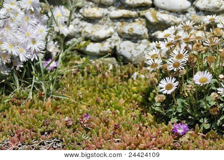 Wild Flowers Set Against A Drystone Wall In Cornwall, Uk.