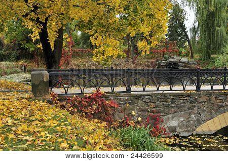 Autumn maple, arched bridge. Dendro