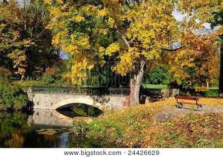 Autumn maple, arched bridge. Dendropark