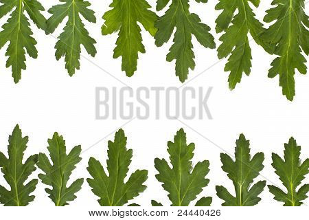 Green Leaf Border Over White
