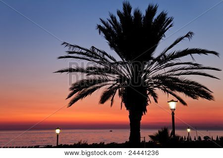 Palm Tree On Sunset Sea Beach