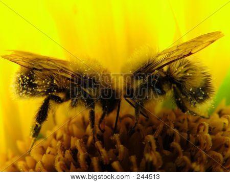 Bees - Team  Work