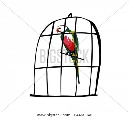 parrot in hutch on white background