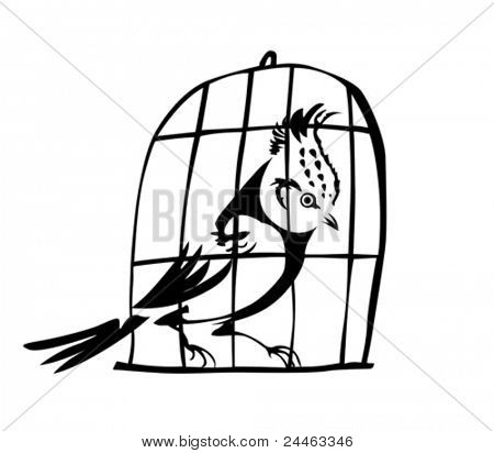 goldfinch in hutch on white background