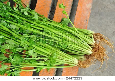green celery plant sell in the market