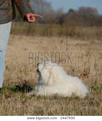 Obeying Dog