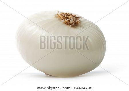 Single Peeled White Onion Isolated