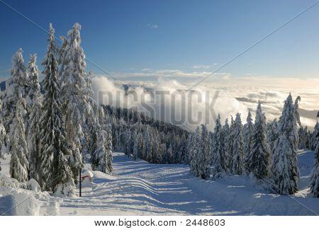 Mt. Seymour Ski Resort With Fresh Snow