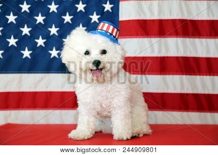 poster of Bichon Frise Dog with American Flag. A purebred Bichon Frise female dog smiles as she poses with an