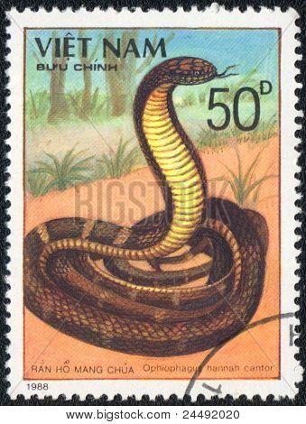 King Cobra - Ophiophagus Hannah