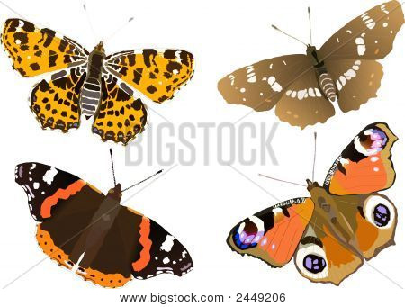 Illustration  Butterfly Collection