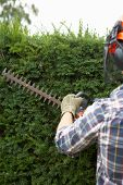 image of trimmers  - Man trimming hedge - JPG