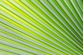 Fresh Leaf Texture Or Leaf Background For Design. Abstract Green Leaf Texture Or Leaf Background. Be poster