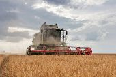 Combine Harvester Working On A Wheat Field. Harvesting Wheat. poster