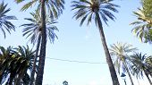 Palm Trees And Sky. Palm Trees In The City Park. Palm Tree At Summer Day. Summer Travel Concept Back poster