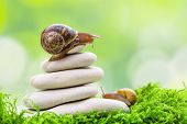 A Snail On The Top Of A Pile Of Pebbles Encourages Its Partner. Motivation, Coaching Teamwork, Partn poster