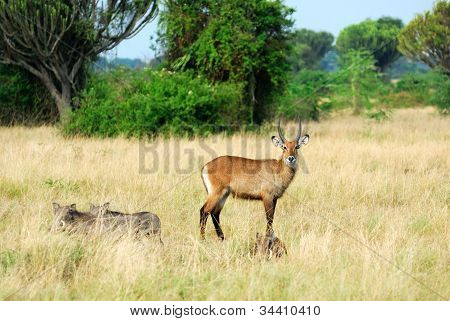 Queen Elizabeth National Park's Animals